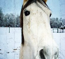 Snow Struck Horse by CrissyAnderson
