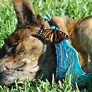 Dog and Butterfly by Donna Adamski