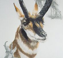Pronghorn by BarbBarcikKeith