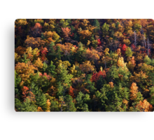 A Slice of Fall Canvas Print