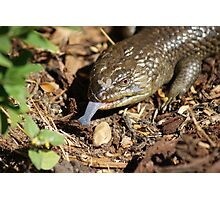 Blue tongue  Photographic Print