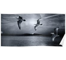 Seagulls flying in storm Poster
