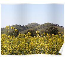 Canola Field - North East Victoria Poster