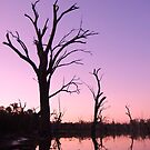 Gum Swamp at Dusk by Amy Evans