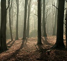 Corbar Woods in the morning by stellaozza