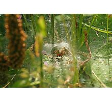 Into the spider's lair Photographic Print