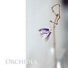 Dried orchid by narabia