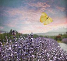 Field of Lavender Flowers, Blue Sky, Pink Sunset, and Yellow Butterfly by BrookeRyanPhoto