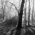 The woods in mono by stellaozza