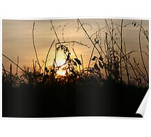 Sunset Silhouettes - Brambley Hedge Poster