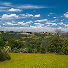 Strzelecki Ranges, taken at Allambee Junction. Victoria. by johnrf