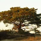 Tree in late sunlight by Taka