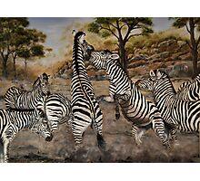 """Zebra Stallions"" - Oil Painting Photographic Print"
