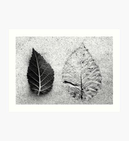 Leaf And Leafless Art Print