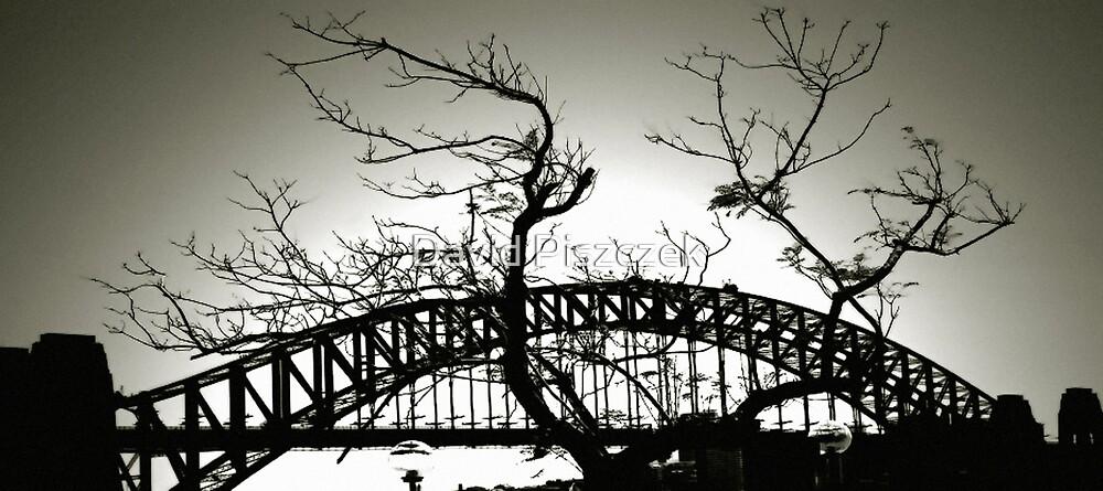 Sydney Harbour Bridge And Tree by David Piszczek