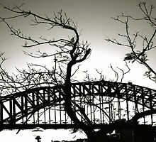 Sydney Harbour Bridge And Tree by David Piszczek