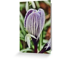 crocus snowdrop and water droplets Greeting Card