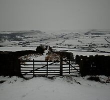 That Gate Again - The Collective! by dougie1