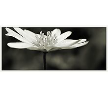 Flower Black and White Photographic Print