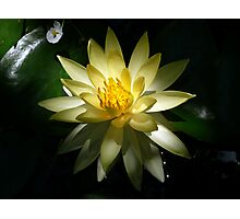 Lotus Bloom Photographic Print