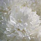 Wonderous White by Caren