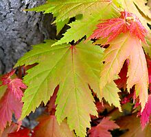 fall colors in spring by 1busymom