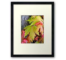 fall colors in spring Framed Print