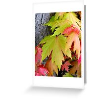 fall colors in spring Greeting Card
