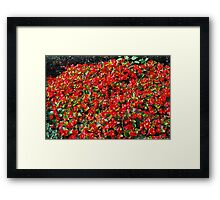Simply Red... Framed Print