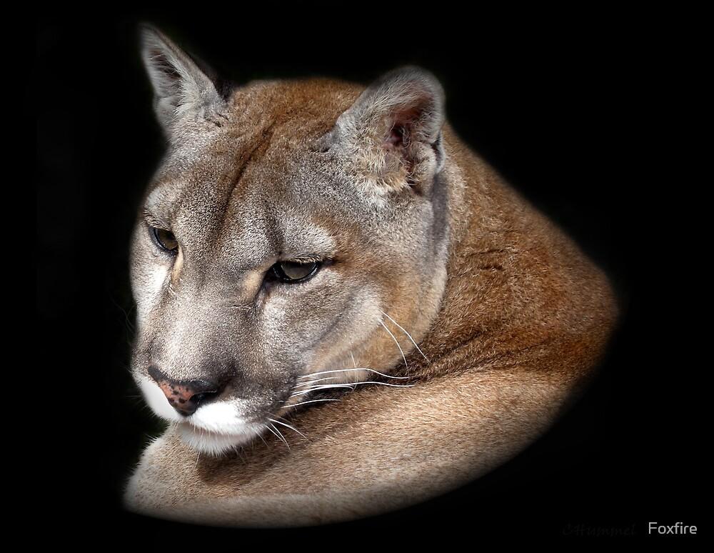 COUGAR  (Puma Concolor)  /  Mountain Lion by ©FoxfireGallery / FloorOne Photography