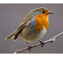 European Robin Photographic Print