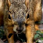 Squirrel by angelc1