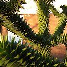 Abstract Plant by Matt Roberts