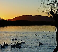 Pelicans At Sunset by Evita