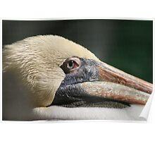 Pelican Blues.............. Poster