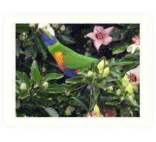Rainbow Nectar Art Print