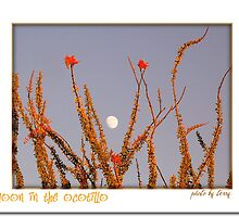 Moon in the Ocotillo by Terry Temple
