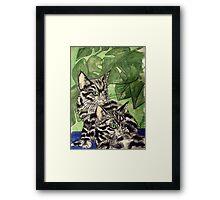 Tabby Kittens Framed Print