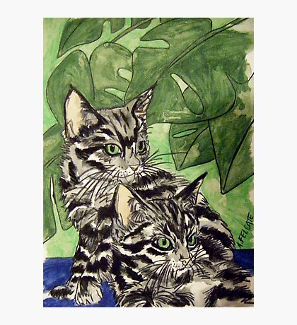 Tabby Kittens Photographic Print