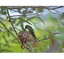 HUMMER MOMMA  Photographic Print