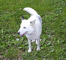 For The Love Of Tika, December 1996 - April 9, 2009 by Barbara A. Boal