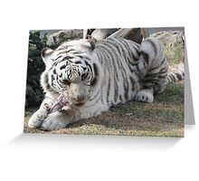 white tiger eating Greeting Card