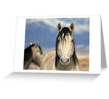 Scrutiny Greeting Card