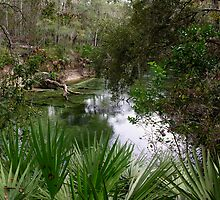 beautiful blue springs by 1busymom