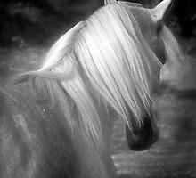 Moonlite by Sharon Morris