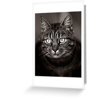 Mishka Greeting Card