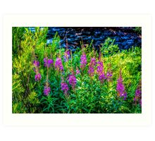 Along Gore Creek Art Print