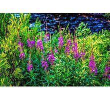 Along Gore Creek Photographic Print
