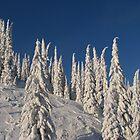 Winter Wonderland by SpringLupin