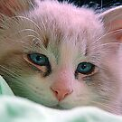 Baby's Got Blue Eyes by Joanne  Bradley